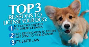 Reasons to License Your Dog: Control Spread of Rabies, Identify Lost Dogs, State Law